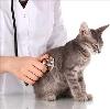 Ветеринарные клиники в Андропове